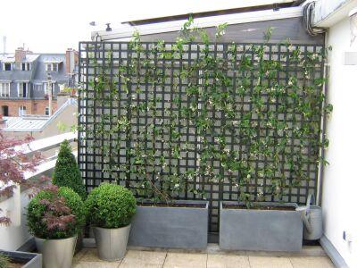 Cattleya paysages terrasses et balcons pot es et - Treillis pour terrasse ...