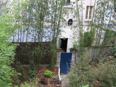 cattleya paysages v g talisation plantation de bambous g ants de 6 5 m tres. Black Bedroom Furniture Sets. Home Design Ideas